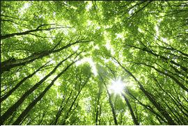 On voit les correspondances entre la nature de Baudelaire, les arbres et l'homme.